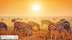 cebras áfrica